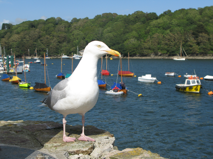 A random summer day in Fowey's Harbour